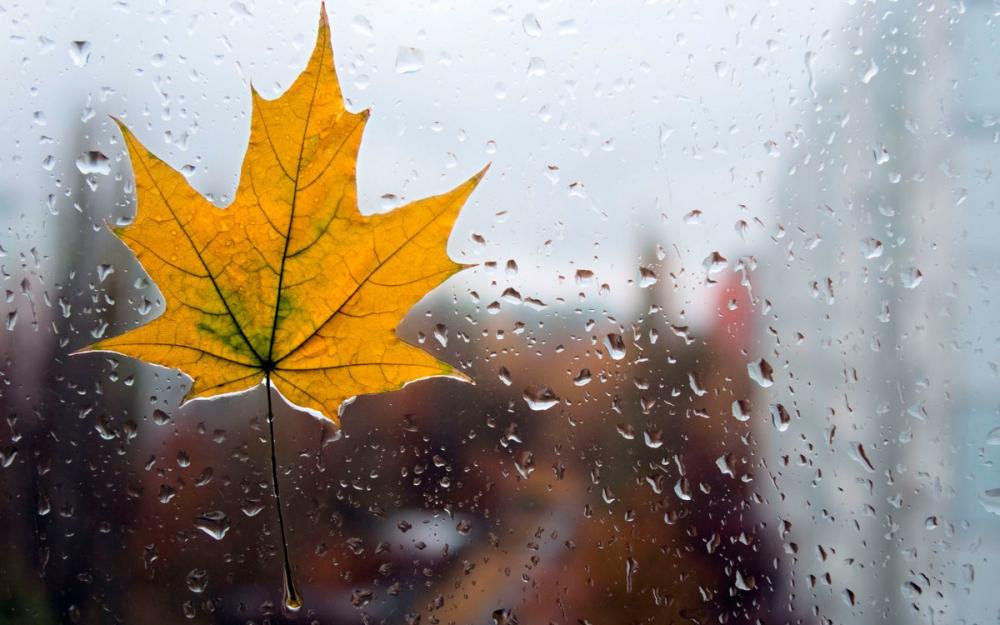 Во вторник, 25 сентября, в Анапе утром будет дождь