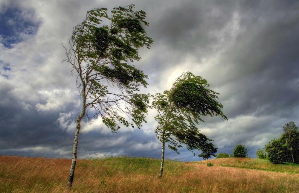 Когда же успокоится этот бешеный ветер в Анапе?!