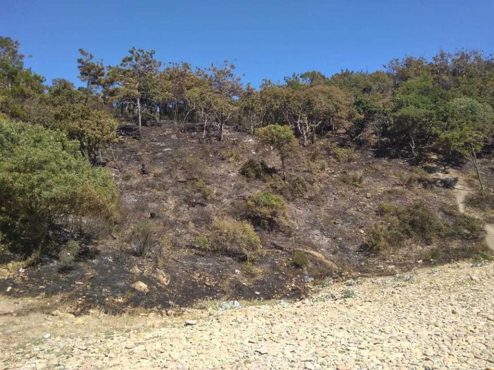 В течение восьми часов пожарные и туристы тушили огонь на Утрише под Анапой