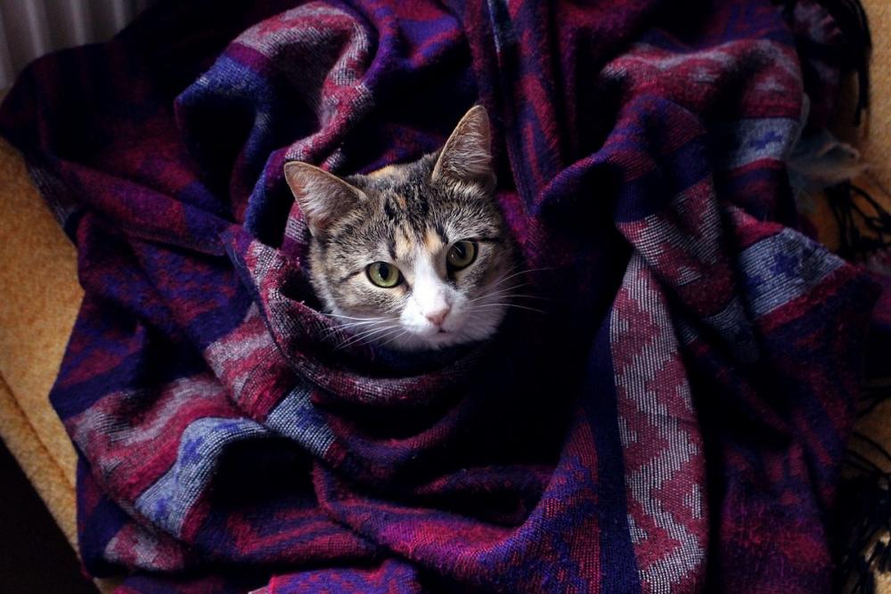 Вирусы атакуют: что нужно знать анапчанам о вредности холодного помещения
