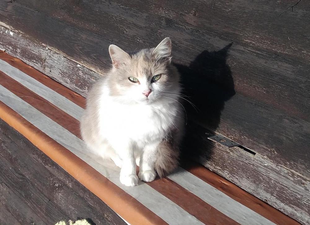 В Анапе «квартирный вопрос» кошек и собак сдвинулся с мёртвой точки