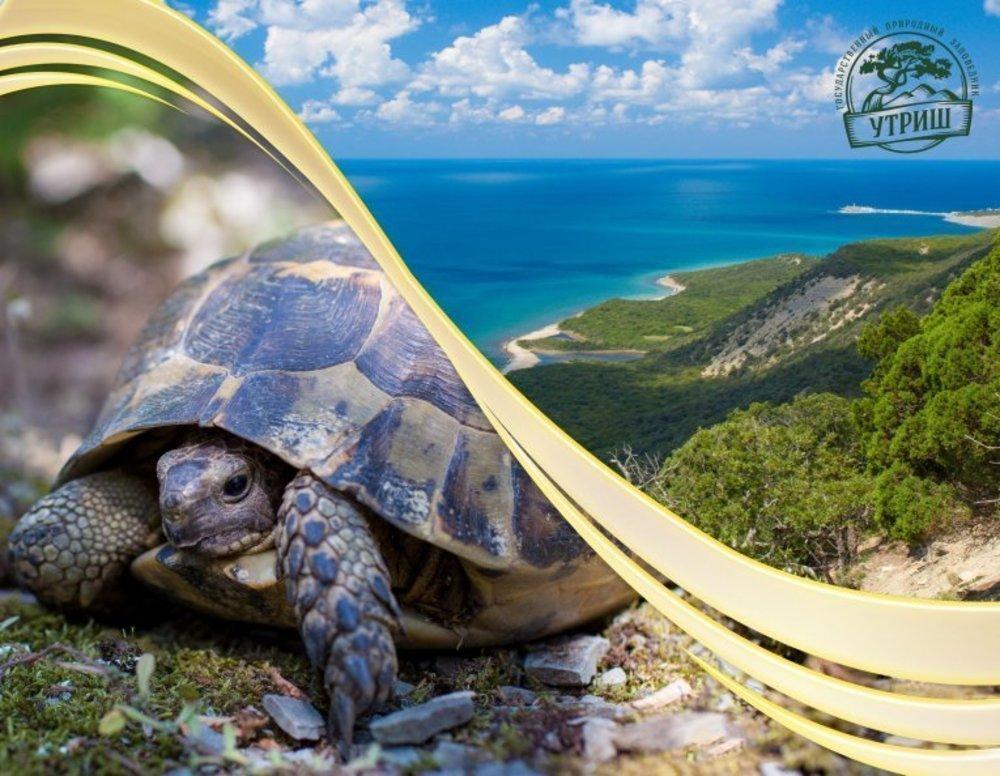 В Анапе состоится флешмоб, посвященный Дню черепахи