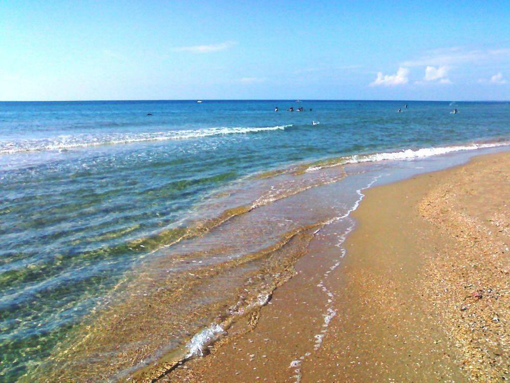 Водоросли на центральном пляже отпугивают отдыхающих