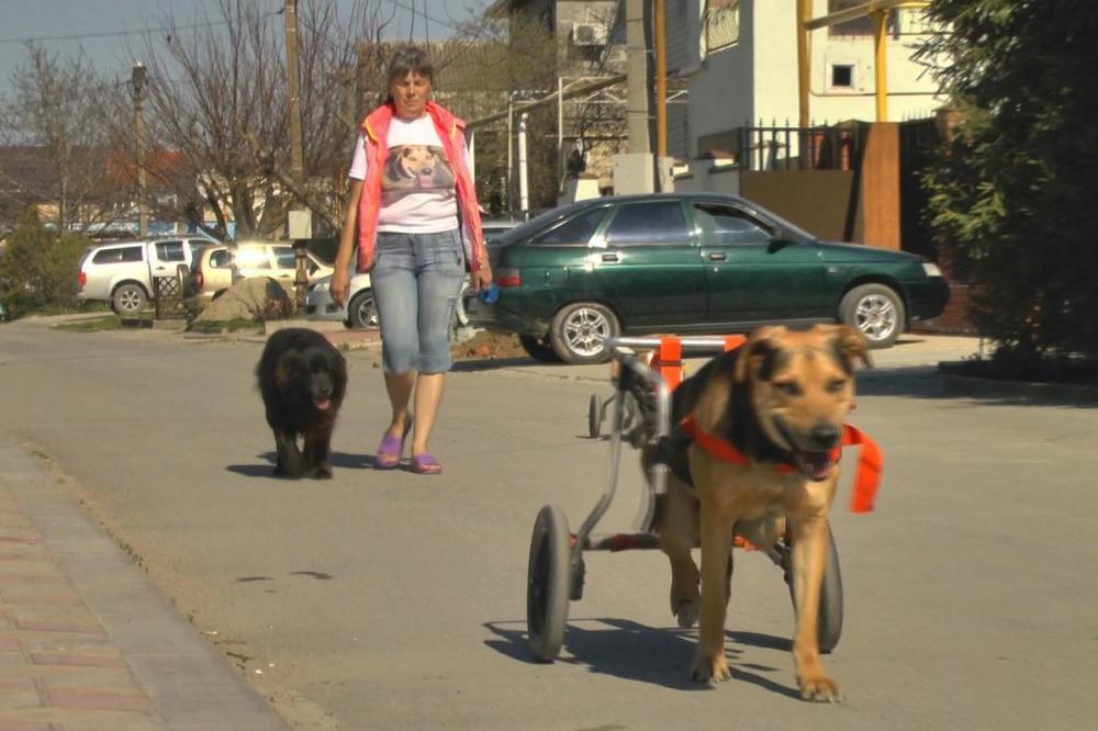 История о двух собаках на инвалидных колясках заставила анапчан плакать