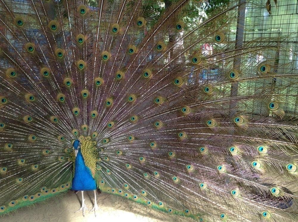 Экзотические птицы «прилетели» в Анапу