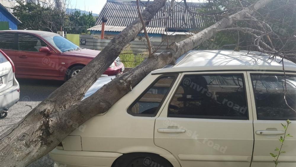 В Краснодаре град, в Новороссийске поваленые деревья, а в Анапе бархатный сезон
