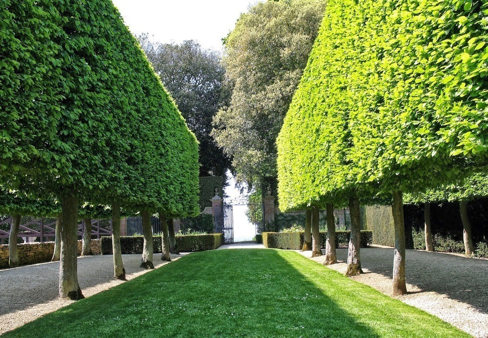 Анапа может получить в дар 1000 деревьев, если победит в конкурсе «Аллея Славы»