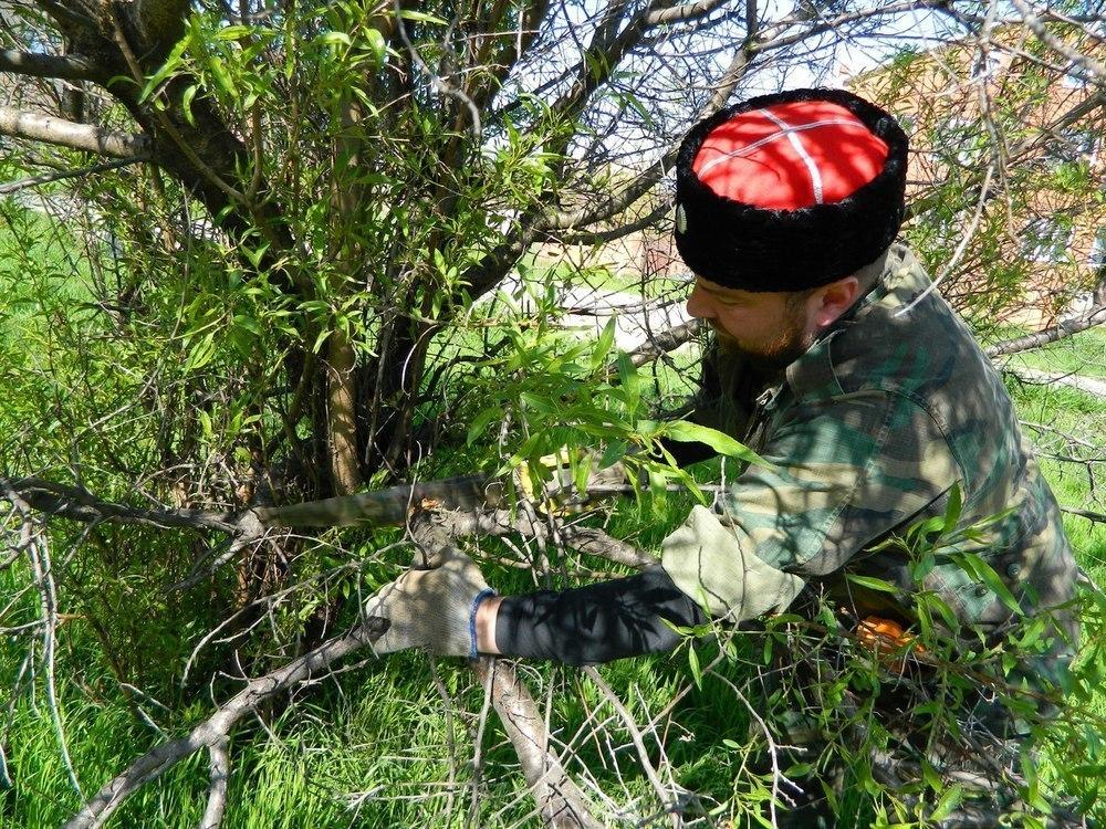 В Анапе казаки с пилами и топорами собрались у администрации Супсеха и навели там порядок