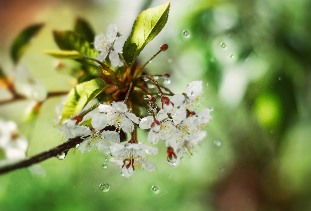 15 апреля в Анапе дождь и порывистый ветер