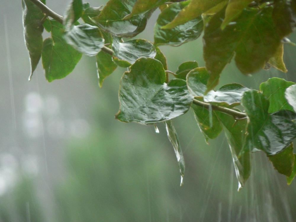 Во вторник, 16 июля, в Анапе ожидается дождь