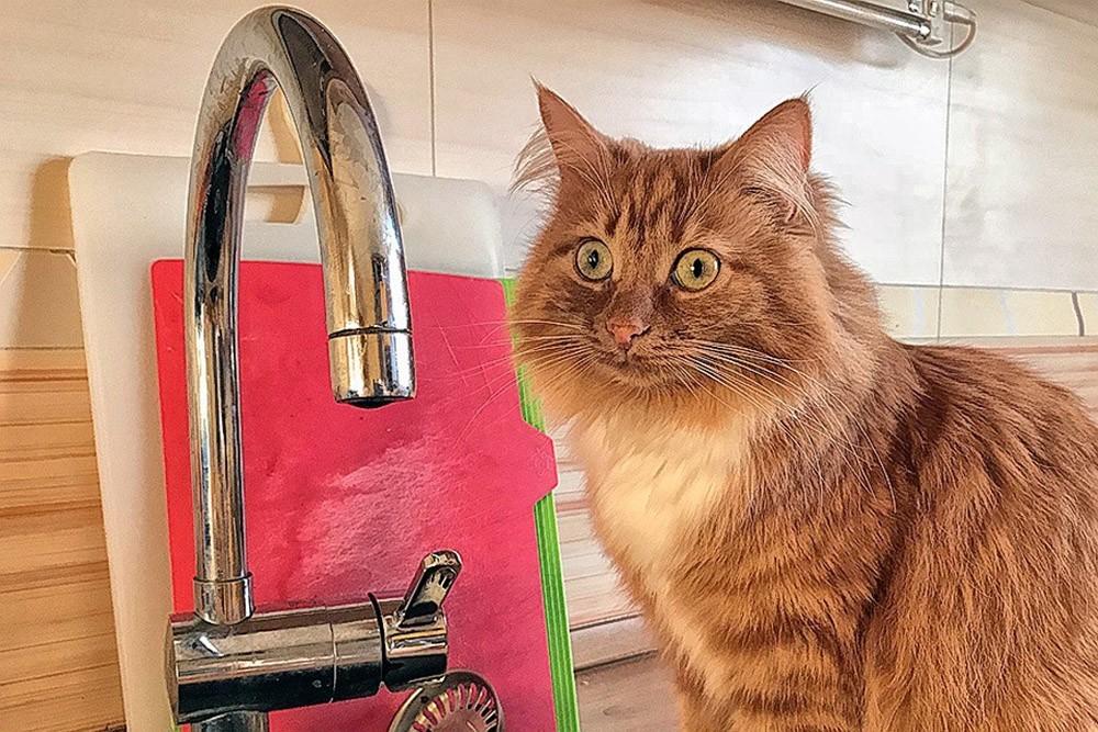 18 сентября несколько домов в Анапе останутся без воды: кому «повезёт»?