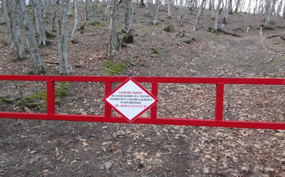 Четверо туристов вырубали деревья в заповеднике «Утриш» под Анапой