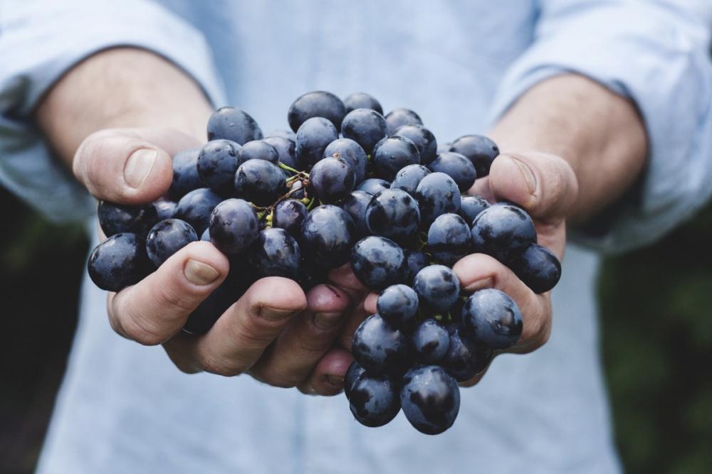 Анапчанам предлагают бесплатно освоить профессию винодела