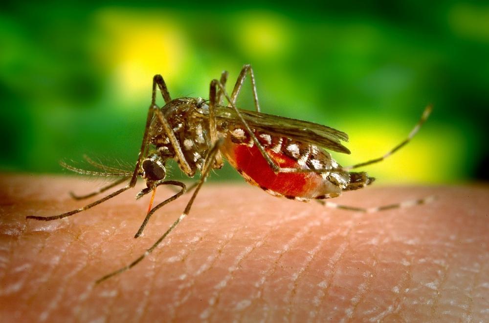 Смертельно опасное заболевание по Дону разносят комары: чего ждать в Анапе?