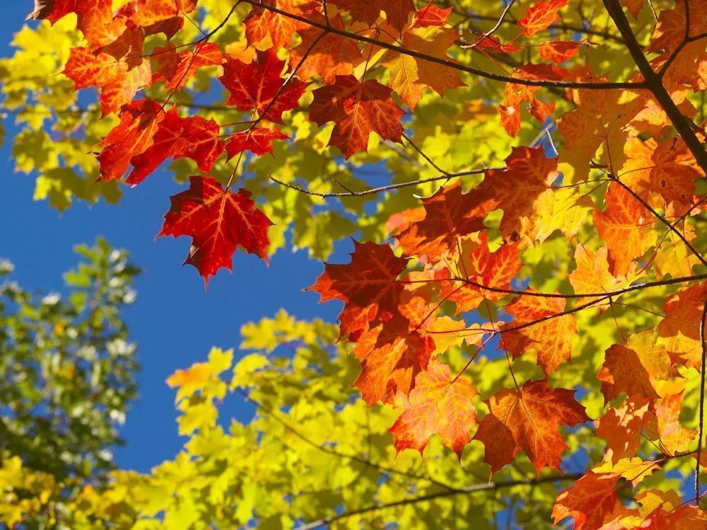 12 октября в Анапе по-прежнему бабье лето