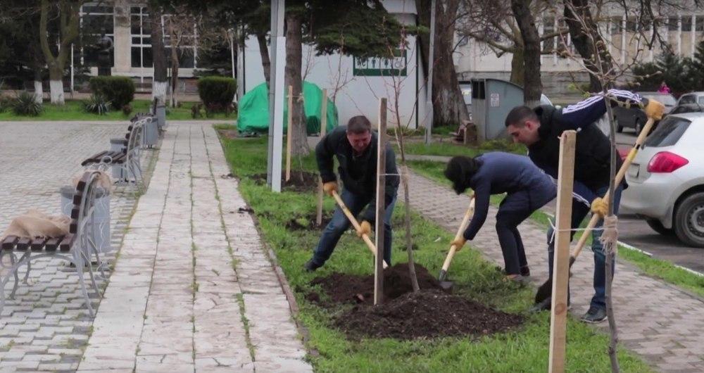 Более 600 деревьев и 300 кустарников высадили в апреле анапчане