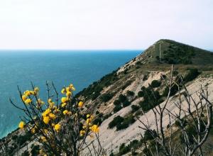 Красочная природа Анапы 13 апреля в объективе «Блокнота»