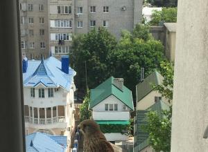Хищный сокол «Пустельга» прилетел поглазеть в анапские окна