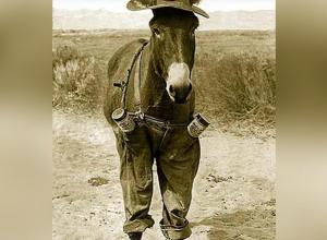 Ослик в шляпе был основным транспортным средством в Анапе в 1937 году