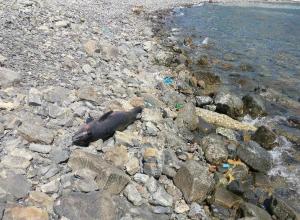 В Анапе мёртвые дельфины несколько часов пролежали на берегу