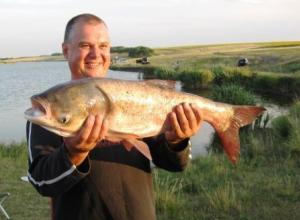 Сорок лет назад деликатесная рыба сама плыла в рот жителям Анапской