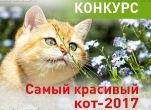 Определены победители конкурса «Самый красивый кот Анапы -2017»