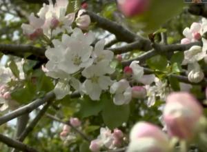 Курорт утопает в цветах: Анапа в объективе «Блокнота»