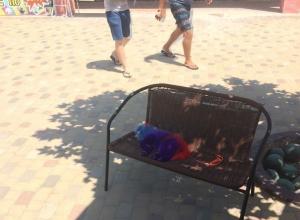 В Анапе у аквапарка Тики-Так снова встретили перекрашенных собак
