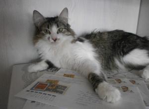 Кошка, которая спасла жизнь человеку, участвует в конкурсе «Мартовские коты»
