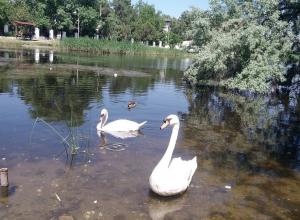 Лето в Анапе, но лебеди не улетели, - погода на сегодня, 7 июня