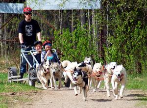 В Анапе могут появиться прогулки по городу-курорту в собачьих упряжках