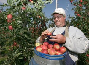 Садоводам Анапы компенсируют большую часть затрат на посадку плодовых деревьев