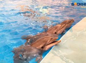 После общения с анапскими дельфинами ребенок-аутист заговорил!