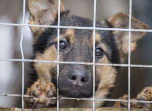 «Бездомных животных ждёт мучительная смерть» - анапчанка выступает за создание приюта