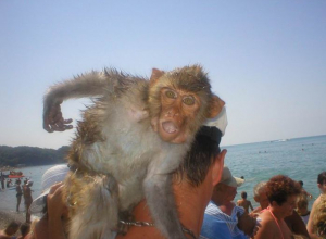 Пляжный фотограф в Анапе развёл клиентку на деньги, а после назначил свидание её дочке