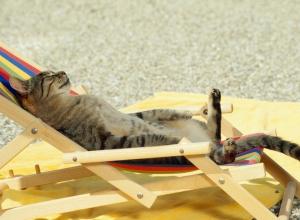 В следующем году на пляжах Анапы для отдыхающих оставят только лежаки и зонтики