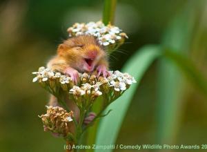 Интересная информация для анапчан: определены самые смешные фотографии дикой природы в 2017 году