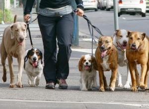 Не чеховская дама с собачками прогулялась по Анапе и стала центром скандала на Крымской