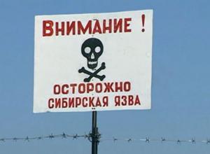 Предупреждение Роспотребнадзора: сибирская язва может добраться до Анапы