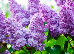 Бесстыжие хамы рвут живые цветы, вот мы и вырезаем искусственные, - анапчанка о статьях на «Блокноте Анапы»