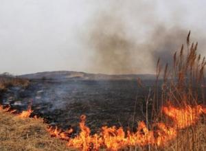 «Диверсией» назвал Юрий Поляков недавний пожар в Благовещенских плавнях