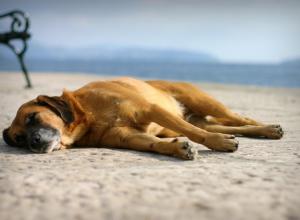 Кто должен был убрать с улицы мёртвую собаку в с. Витязево под Анапой?
