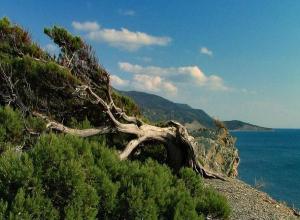 Анапа находится в одном из самых экологически чистых регионов страны