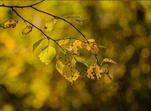 26 сентября в Анапу пришла настоящая осень