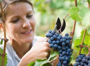 В Анапе идёт создание винодельческого кластера, не имеющего аналогов в мире