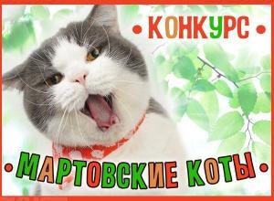 Поторопитесь принять участие в конкурсе «Мартовские коты»