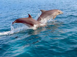 Почему под Анапой гибнут дельфины?