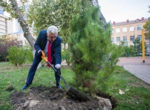Скоро на улицах Анапы появится 440 новых деревьев