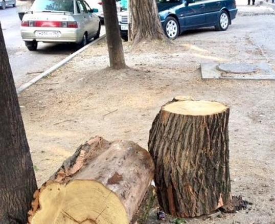 Рядом с Анапой вырубают леса