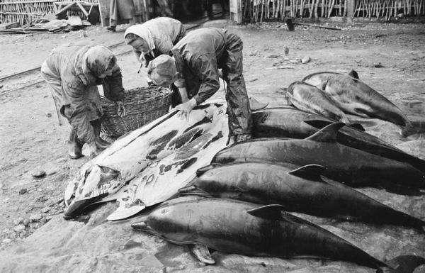 История Анапы: в годы войны анапчане убивали и ели дельфинов